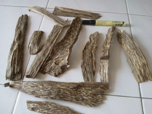 agarwood-chips-inoculated